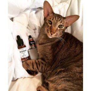 cat with vape
