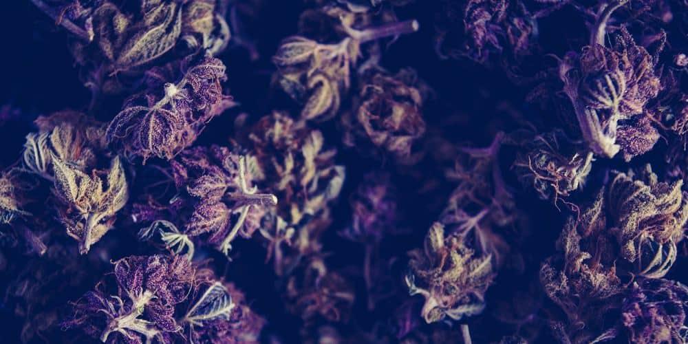 an image of medical marijuana