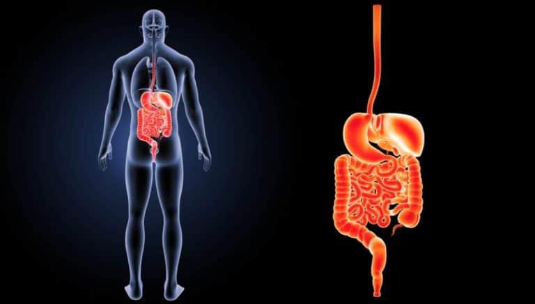 vaping-gut-biome