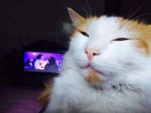 high-cat
